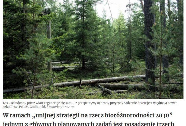 18.02.2021 – Unijna strategia sadzenia drzew a bioróżnorodność