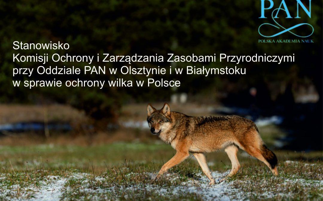 08.03.2021 – Stanowisko Komisji Ochrony i Zarządzania Zasobami Przyrodniczymi PAN w sprawie ochrony wilka w Polsce