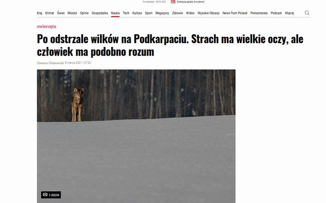 08.03.2021 – wywiad z dyrektorem IBS PAN o rozwiązywaniu konfliktów z wilkami