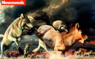 04.05.2021 – Adaptacje wilków do zmian klimatycznych i środowiskowych