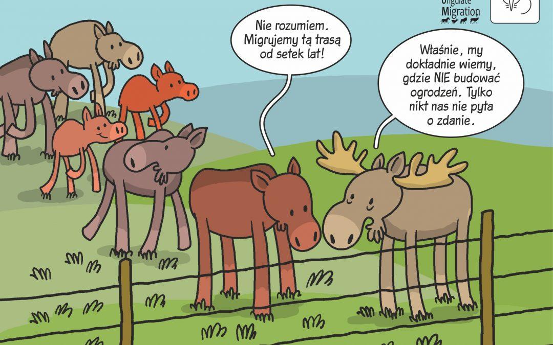 11.05.2021 – Migracje ssaków kopytnych!