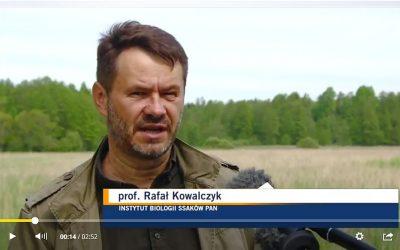 27.05.2021 – Kontrowersje wokół udrożniania koryta rzeki Leśnej w Puszczy Białowieskiej