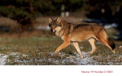 17.06.2021 – Białowieski wilk na okładce czasopisma Conservation & Society