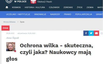 01.06.2021 Jak chronić wilki w Polsce
