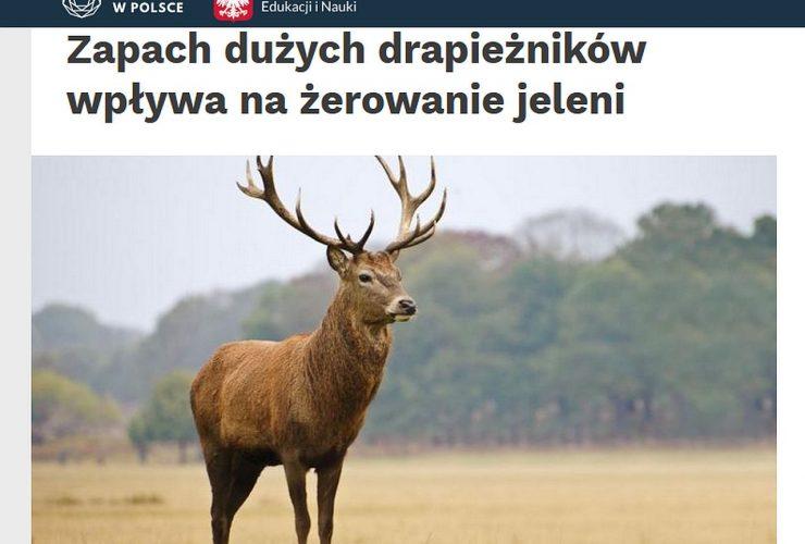 12.08.2021 – Wpływ zapachu dużych drapieżników na jelenie